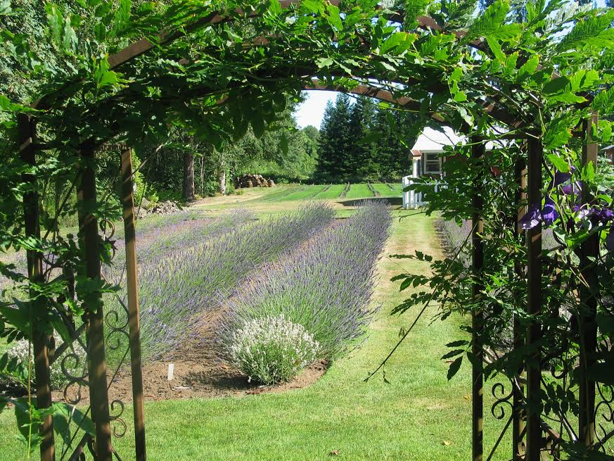 PictureLavender Harvester & Sachets Beaverton OR